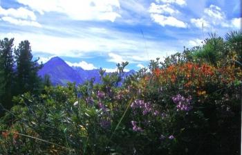 so schön ist Tirol